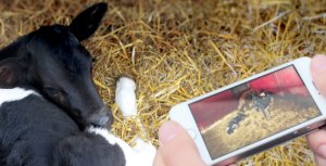 video surveillance agricole